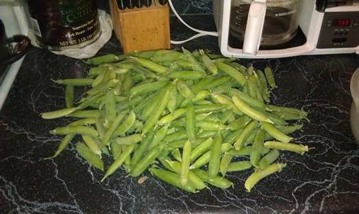 About Half The Peas I Picked Today