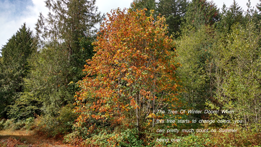 The Tree Of Winter Doom