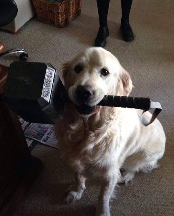 Dog-Thor.jpg